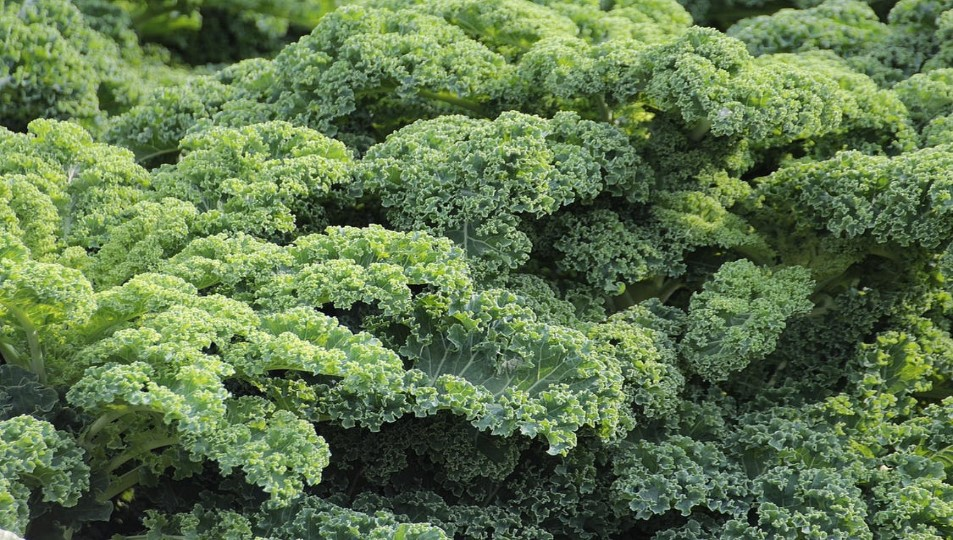 Foods You Can Eat To Beat Depression Leafy Greens